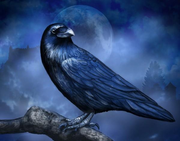 Blue Raven